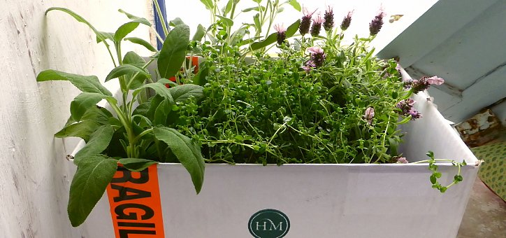 Plantas aromáticas en caja de embalaje de los perfumes Hierbas de Mallorca