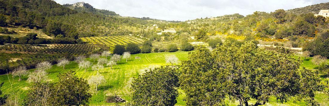 Verdor en los campos labrados de Mallorca, amplia perspectiva del paisaje